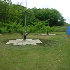 モモの樹に畳表の防草シート