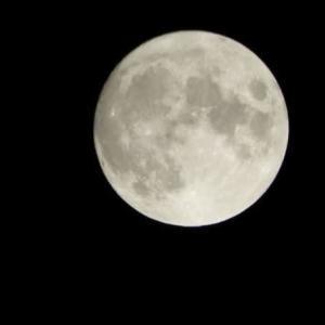 暦では今夜は中秋の名月・・・だけど