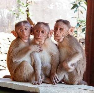 無限の猿定理