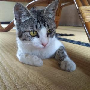 先住猫との住み分け/間取り図