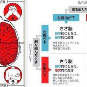 あなたは、右脳タイプ・左脳タイプ?
