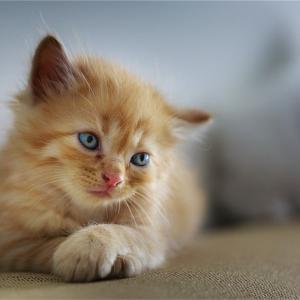 猫ちゃんの避妊手術前に