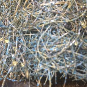 加温採卵のやり方②採卵編