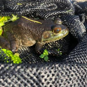 カエルパラダイスと生き物色々