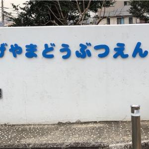 【横浜旅行編】ビックリ‼︎コスパ日本一の動物園は横浜にあった⁉︎((((;゚Д゚)))))))
