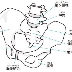 出産後の痛み編 腰痛・恥骨痛・尾てい骨痛なら産後骨盤矯正を!