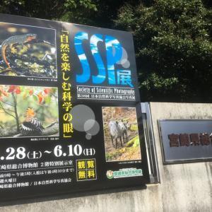 今年も開催SSP宮崎展