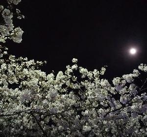 月夜なのに真っ暗、暗い、クライ……