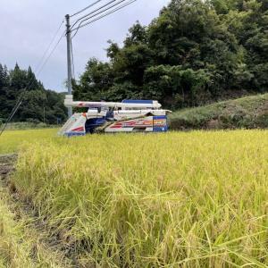 2021年度☆稲刈り開始!