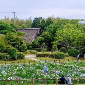 宮地嶽神社の菖蒲を見に行った
