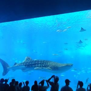 沖縄のサメと海と町