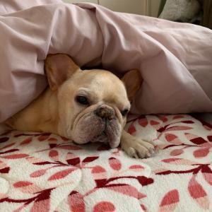 老犬の安眠を妨げることなかれ