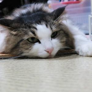 ニューオータニでご飯♪今日は2ニャン2ニャン2ニャンで猫の日