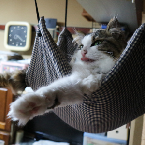 【リアル羊毛フェルト】羊毛フェルトで猫を作るよー。その1