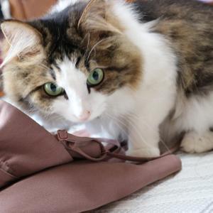 スカートに入りたいネコとButtersのcraft butter sweets