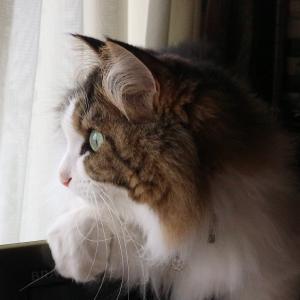 クラッキングがへたくそな猫とヤマザキのクリームたっぷり生どら