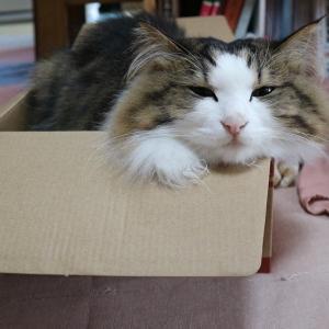 【不名誉な称号】タヌキ顔の猫と呼ばれて。【前編】