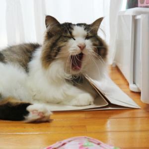 【汚名返上】タヌキ顔の猫と呼ばれて【後編】