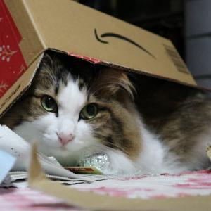 マウスが壊れててんやわんや。ヒメちーの新しい箱に期待。