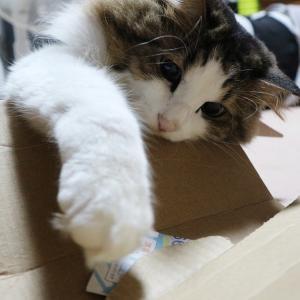 和歌山市のクラウドファンディング野良犬・野良猫保護の為の寄付2400万円を流用
