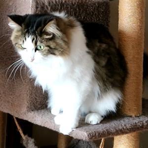 トリキ錬金術終了のお知らせと母の教えを守る猫