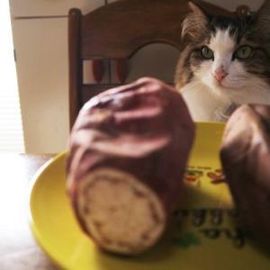 焼き芋は冷やして食べても美味しいか?蔵出し焼き芋かいつかの焼き芋