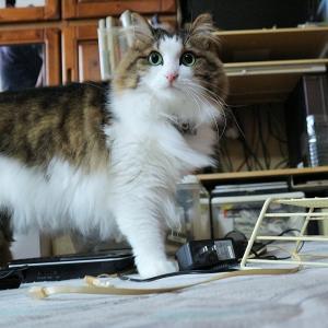 新しいWi-Fiルーターと新しいもの好きな猫とぱぱちゃん