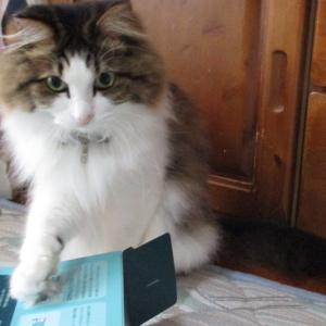 小さすぎる箱に入れない猫と生すじこから作るいくら