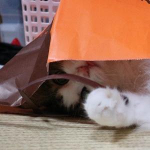 【ロ-ソン】濃厚ピスタチオワッフルコーンアイスアレンジとヒモ遊びをアレンジする猫