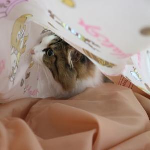 リラックマのエコバッグを作る猫