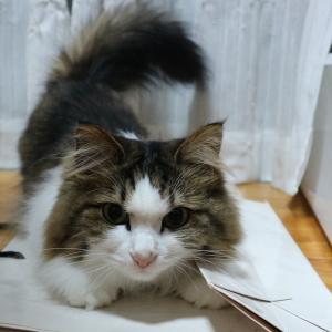 「可愛い」だけじゃない、猫のお仕事追加認定。