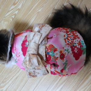 猫に着物を着せるとどうなるか