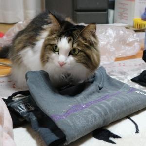 【検証】猫の手も借りたい・猫の手は本当に役に立つのか。
