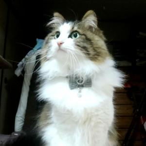 【鉄腕ダッシュ】めだかの学校に興味津々な猫