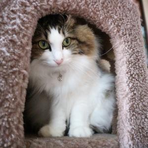【ある朝、目覚めたら猫になっていた!?/ブラック企業の社員が猫になって人生が変わった話】が面白すぎる