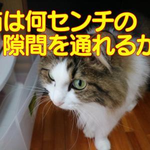 【やはり猫は液体だった】猫の液体化の証拠映像とチャレンジ動画