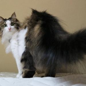 【隙間があれば入りたい!】狭い所に入ることに特化した猫の体。