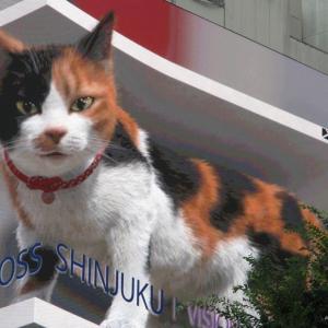 【話題の3D猫】巨大な「三毛猫」 新宿駅前に現れる&SnowMan「HELLOHELLO」フライングゲット