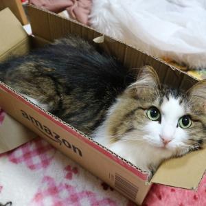 【狭い所が好きすぎる猫】猫が狭い所を好むのは本能だった!