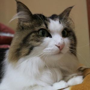 猫のひげって何のためにあるの?【優秀なひげセンサー】
