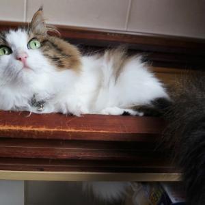 【仁義なき戦い】イギリス政府のお仕事猫は大変ニャ