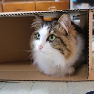 扇風機を買ったらもれなく猫がついてくる…かもしれないお話。