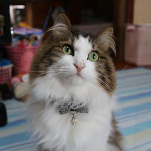 イギリスだけじゃない。日本にもあった!猫の銅像とその物語。