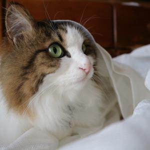カーテンを開いて―静かな木漏れ日ーの―…というわけにはいかない猫との生活。