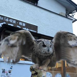 珍しいフクロウが見られるフクロウカフェ その3 ヒスパニアワシミミズク・ウオクイ・マレーウオミミズク〜ふくろう茶房(東京) owl de base(広島)~
