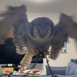 ふぐちゃんの飛翔訓練