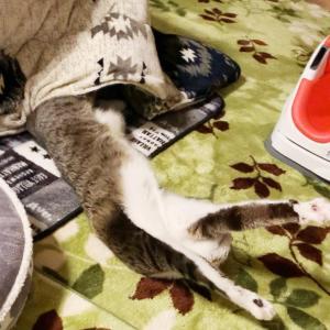★ のぼせ猫