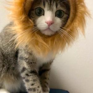 ■ ライオンになれなかった猫
