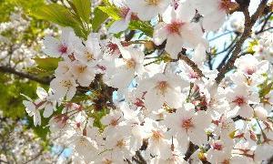 きれいなお花はいかがですか?