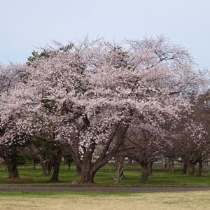 「オニウシ公園」色鮮やかに彩る約500本の花園です。(^_^)/